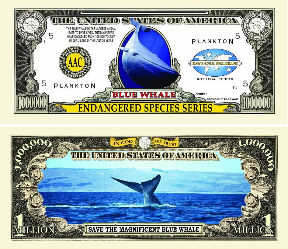 an overview of blue whales one of worlds endangered species