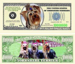 Yorkshire Terrier One Million Dollar Bill