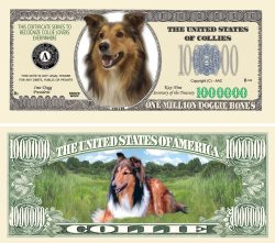 COLLIE MILLION DOLLAR BILL