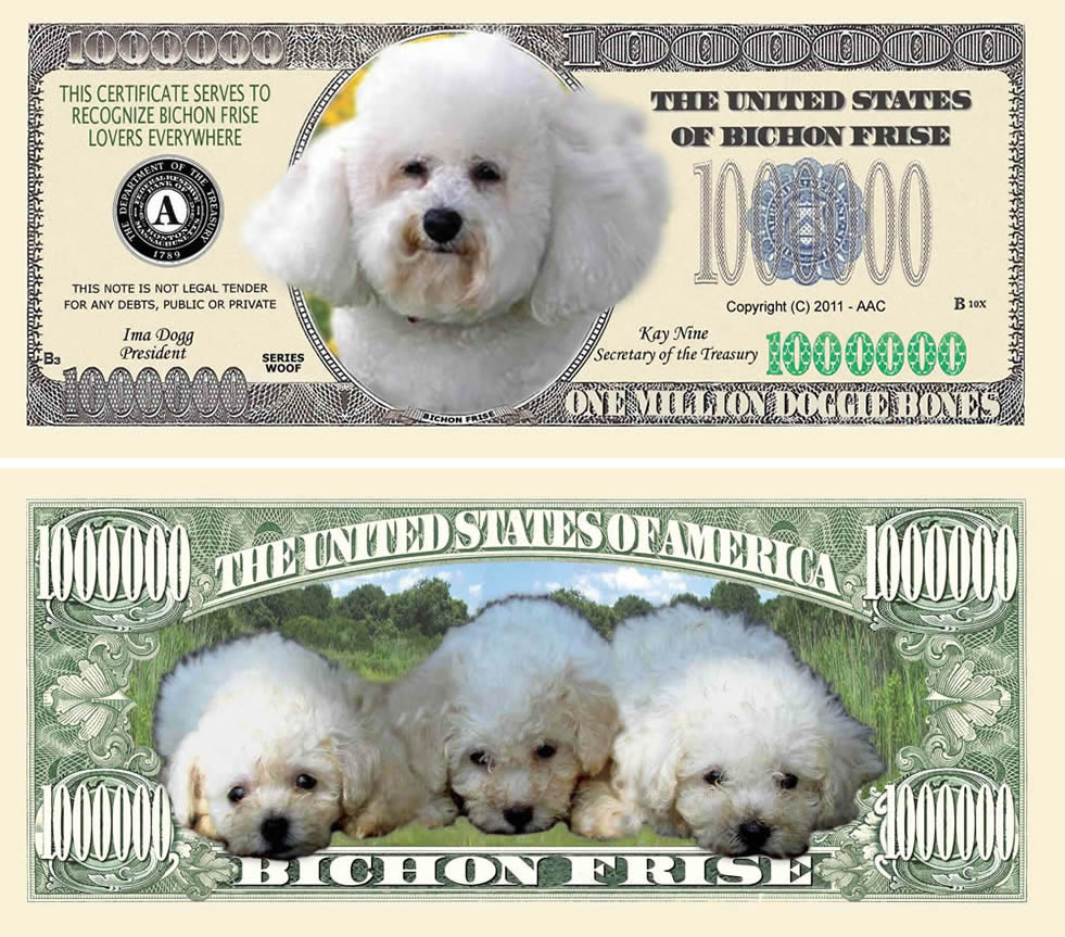 Bichon Frise Dog Million Dollar Bill